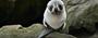 Picture of Elm Wildlife Tours Otago Peninsula Dunedin