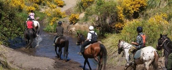 Picture of Back Country Trail Rides - Outback trail 3 hours