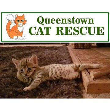 Picture of Donate to Queenstown Cat Rescue